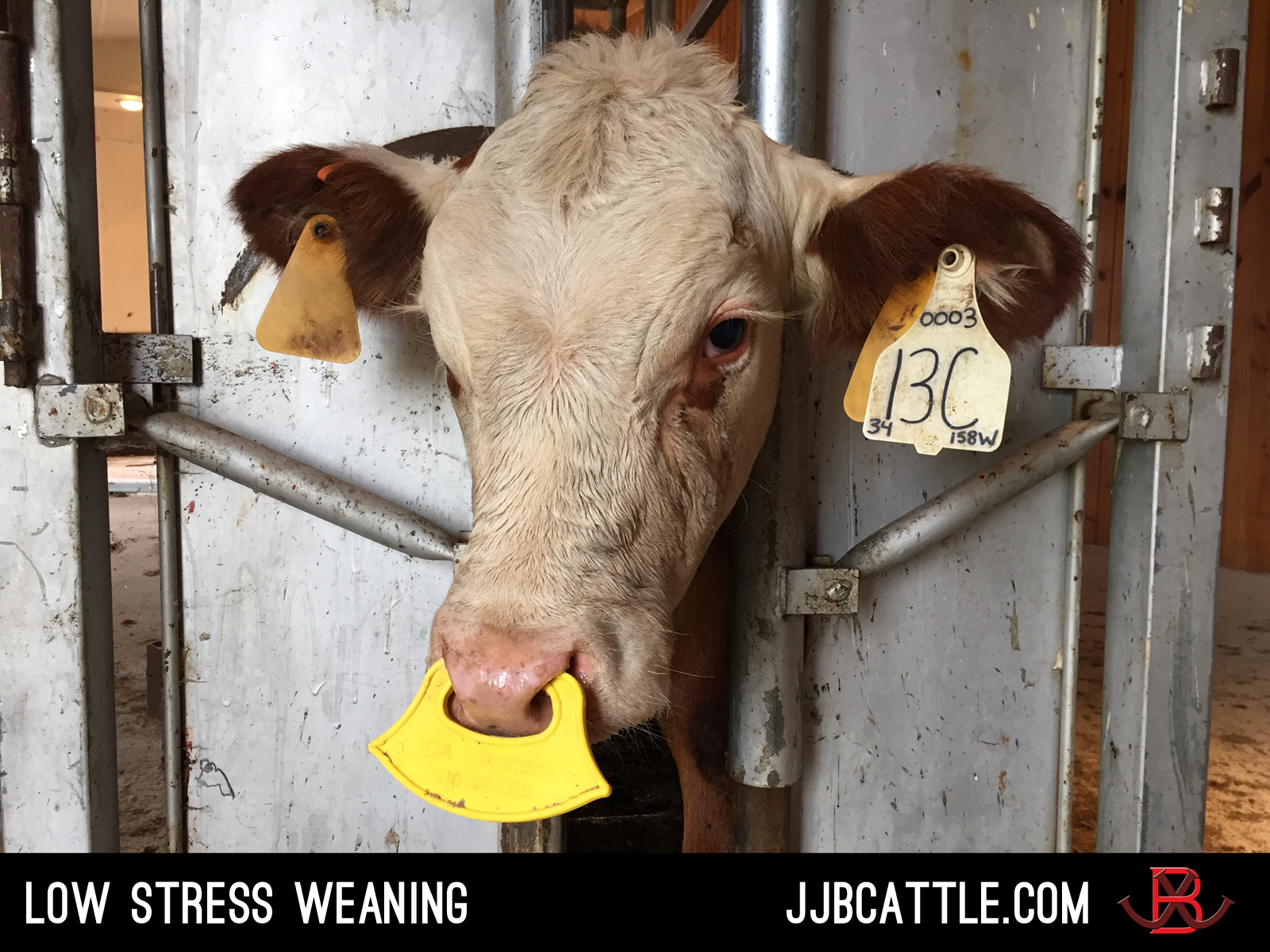 low stress weaning
