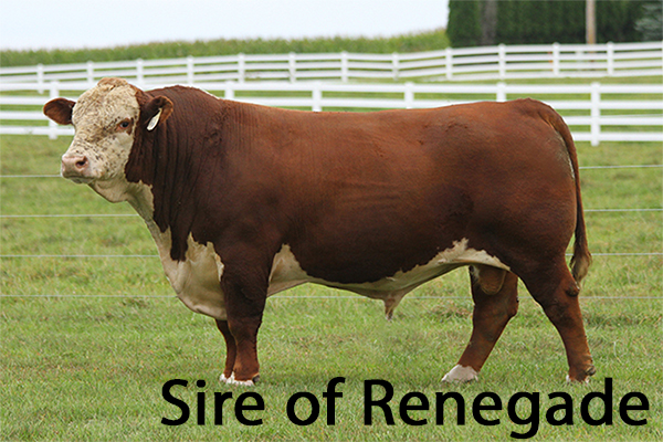 Tribute sire of Renegade